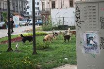 Miting anti-eutanasiere. Iubitorii de animale spun că nu vor câini în stradă, dar că problema nu se rezolvă de azi pe mâine