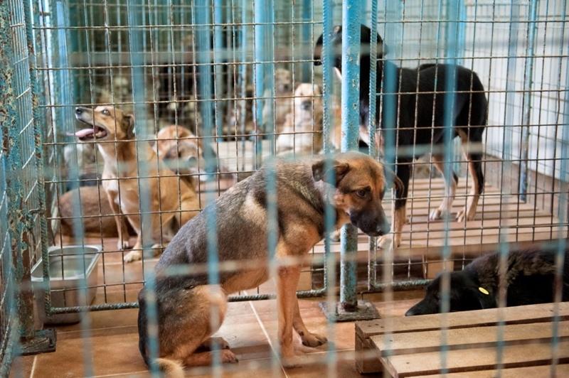 Primul primar care anunţă că va pune în aplicare legea eutanasierii: Cei 700 de câini din adăpost vor fi eutanasiaţi primii