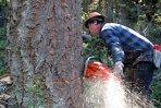 Raport Greenpeace: Aproape 19.500 de cazuri de tăieri ilegale de păduri, înregistrate în 2012 în România