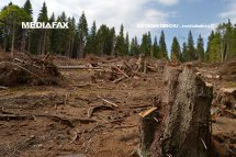 Varga: România poate rămâne fără păduri, în 10-20 de ani,dacă se continuă tăierile ilegale şi exploatările în ritmul actual