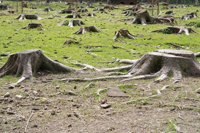 Şeful APM Covasna: Am elibarat doar acord de mediu pentru Holzindustrie Schweighofer, nu autorizaţie