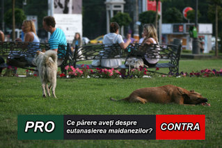 PRO sau CONTRA eutanasierii câinilor fără stăpân. SONDAJ Gândul