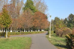 Descoperire macabră în cel mai mare parc din Constanţa