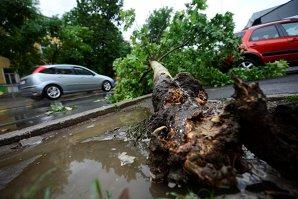 ISU Bucureşti: Peste 130 de copaci doborâţi de vânt şi 65 de maşini avariate, în ultimele 24 de ore