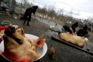 O femeie a murit, iar alte 22 de persoane au ajuns la spital cu trichineloză, după ce au consumat carne de mistreţ