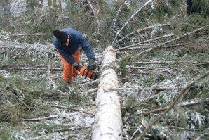 Un bărbat din Bacău tăia lemne în pădure când în faţă i-a apărut o ursoaică. Cum a reuşit să scape în ultimul moment