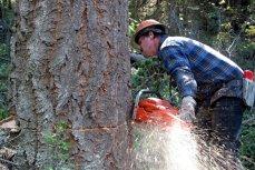 Proiect: Compensaţii de sute de euro pe hectar pentru proprietarii de păduri din arii protejate