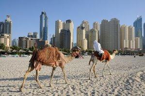 La început, ştergea mesele, însă i-a venit o idee pentru care şeicii din Abu Dhabi sunt dispuşi acum să plătească sume generoase