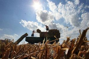 Laurenţiu Baciu, LAPAR: Seceta determină pierderi de două miliarde euro şi va majora preţurile produselor româneşti