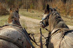 Moarte cumplită pentru un vasluian: sugrumat cu hăţurile cailor, după ce a fost târât peste 200 de metri