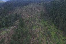 Furtuna a făcut prăpăd în Suceava: Mii de hectare de pădure distruse de vânt