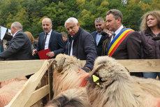 Daea: Pentru unii devin agasant explicând că oile sunt o resursă extraordinară, dar nu pot altfel