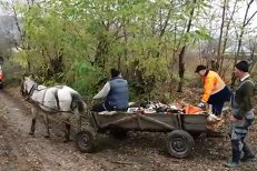 Pacientă transportată cu căruţa la ambulanţă, din cauza drumului impracticabil