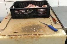 Sute de kilograme de carne ţinute într-o mizerie cruntă şi ustensile ruginite, la o carmangerie din Constanţa. GALERIE FOTO