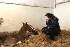 """Cai şi ponei, îngrijiţi în singurul """"spital de cai"""" din Transilvania. Încă o dovadă că se poate! Galerie FOTO emoţionantă"""