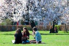 Floriile, sărbătoarea creştină care vesteşte Paştele. Mesaje, urări şi felicitări de Florii