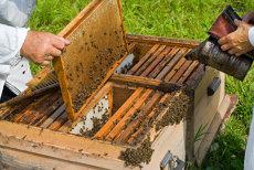 """Doi morţi şi o persoană în şoc anafilactic, după ce au fost atacate de un roi de albine în judeţul Buzău. """"Au vrut să le mute, dar stupii s-au răsturnat"""""""