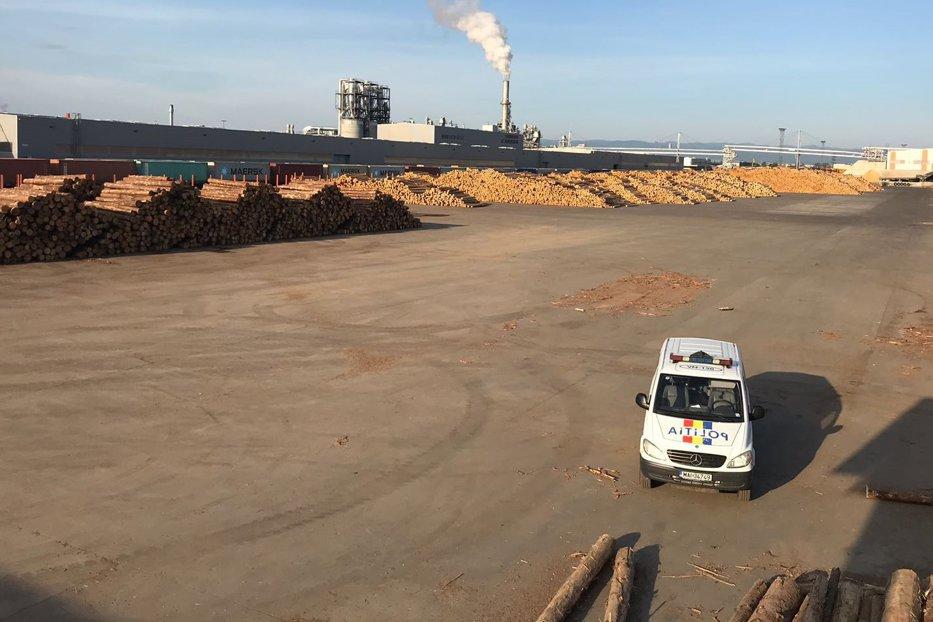 Percheziţii la fabricile firmei Schweighofer Holzindustrie pentru comerţ ilegal cu lemn. Prejudiciu de 25 milioane de euro. Reacţia companiei