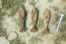BOMBE şi PROIECTILE din al Doilea Război Mondial, descoperite la Vaslui de un localnic