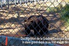 Doi îngrijitori de la Grădina Zoo Braşov, ATACAŢI de un URS