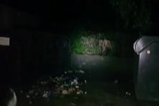 Un pui de urs rămas captiv într-un container, eliberat de jandarmi