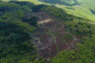 DEFRIŞĂRI ŞI BRACONAJ în parcuri naţionale cu păduri seculare. Organizaţiile de mediu DEZVĂLUIE CORUPŢIA din Romsilva