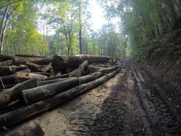 Organizaţie de mediu:Se fac pregătiri pentru a fi tăiate păduri seculare din Parcul Naţional Semenic