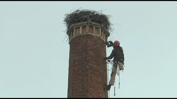 Echipe de intervenţie caută soluţii pentru salvarea unei berze care a rămas peste iarnă în Braşov