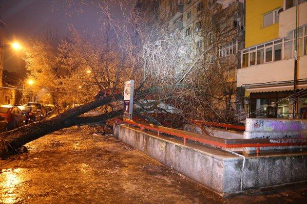 90 de copaci rupţi de vânt au căzut pe carosabil şi pe 49 de maşini