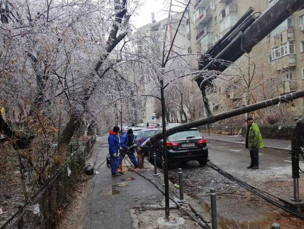 Intervenție la un copac căzut