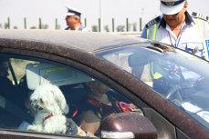 De 8 martie, femeile nu primesc amenzi de circulaţie