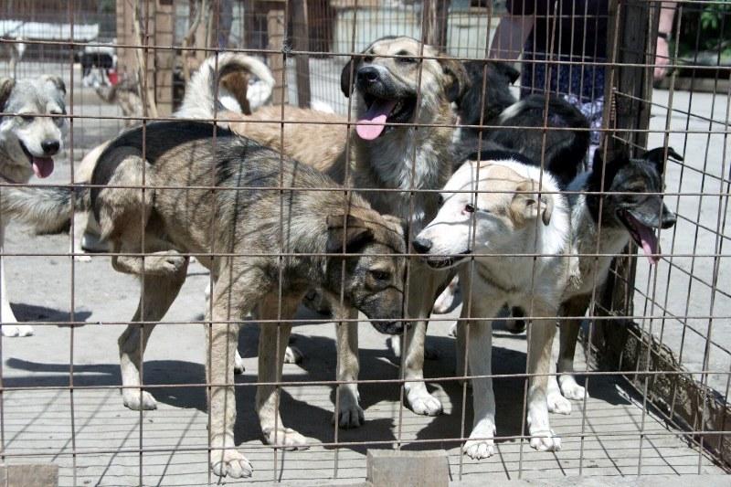Prefectura Bucureşti: Câinii diagnosticaţi cu boli grave, transmisibile la om, ar putea fi eutanasiaţi
