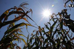 Ponta: Mi-e teamă că seceta şi problemele din agricultură vor afecta creşterea economică
