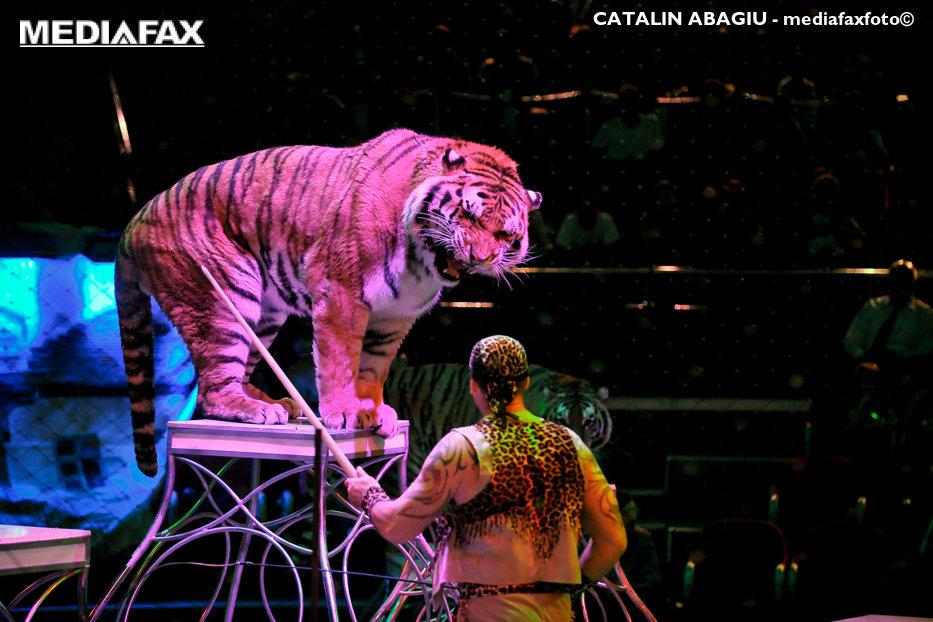 Spectacolele cu animale sălbatice, INTERZISE în Bucureşti şi la circurile private. Proiectul de hotărâre pregătit de Primărie