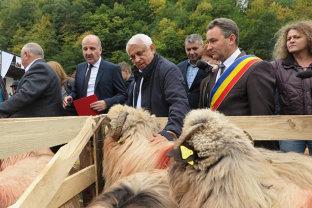 Daea, noi omagii aduse oii: Oaia a descoperit înălţimile şi le-a înnobilat, ciobanii îşi lasă casele crescute din smântână