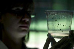 Trei pacienţi infectaţi cu virusul Zika au murit