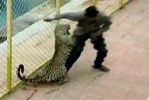 Un leopard a rănit şase persoane într-o şcoală din India