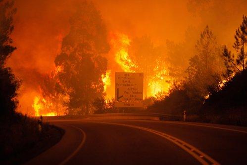 """Tragedie într-o pădure din Portugalia. 57 de morţi şi 59 de răniţi într-un incendiu teribil: """"Oamenii au ars de vii în maşinile lor"""""""