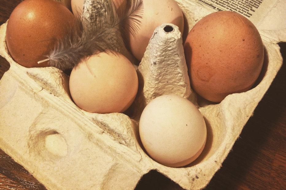 Criza ouălor contaminate. Liderii UE se reunesc de urgenţă