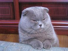 O pisică, personaj principal într-un dosar privind o tentativă de omor în Japonia