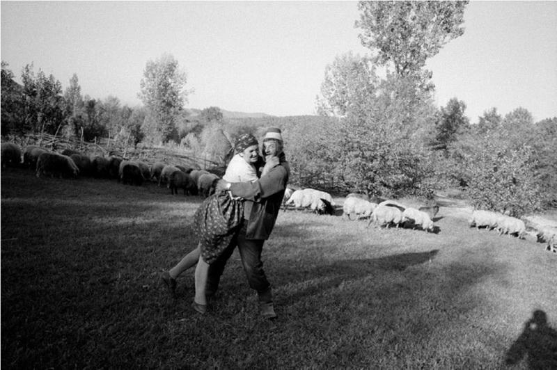 Concluziile unui american după un an de muls vaca în Maramureş