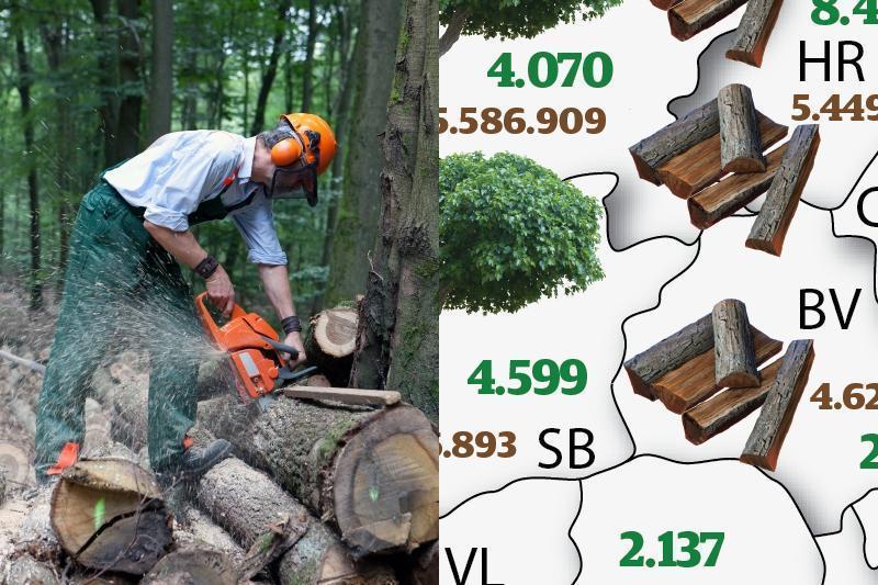 HARTA JUDEŢELOR de unde s-a exploatat cel mai mult lemn. Topul împăduririlor