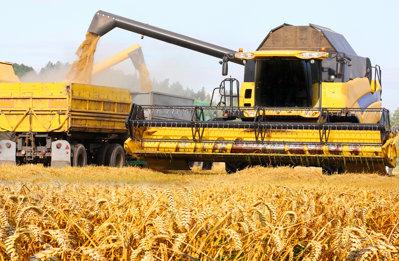 România şi Bulgaria vor profita de restricţiile impuse de Rusia exporturilor de grâu