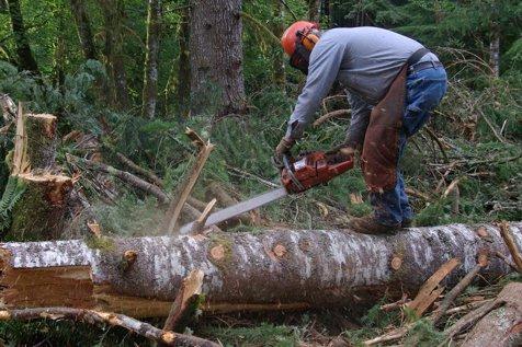 Cea mai mare firmă de procesare a lemnului, Schweighofer, a ajuns să aibă afaceri mai mari decât Romsilva. Cine este