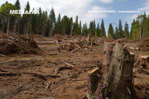 Consiliul Concurenţei a controlat mai multe companii de prelucrare a masei lemnoase
