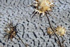 Seceta din această primăvară afectează culturile de grâu, sfeclă de zahăr, orz şi porumb din judeţul Galaţi. Irigaţiile sunt prea scumpe