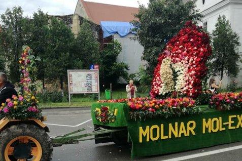 Satul Ciumbrud, CAPITALA TRANDAFIRILOR din România. Peste un milion de plante cultivate anual