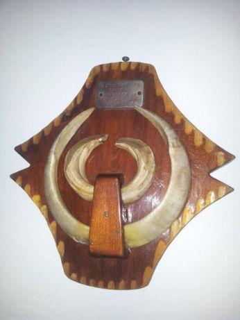 Trofeu cu colţi care a aparţinut lui Adrian Năstase - de vânzare pe OLX