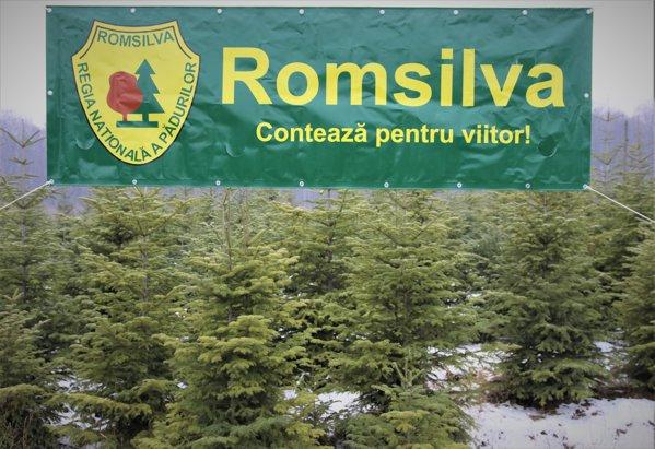 Romsilva a scos brazii de Crăciun la vânzare