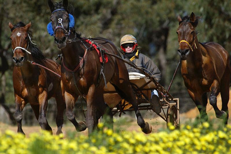 400.000 €, cel mai scump cal de curse vândut vreodată în România